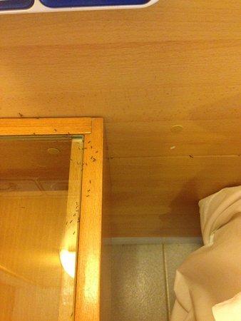 Hotel les illes estartit formigues